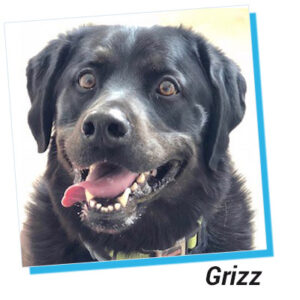 picture of Grizz the dog